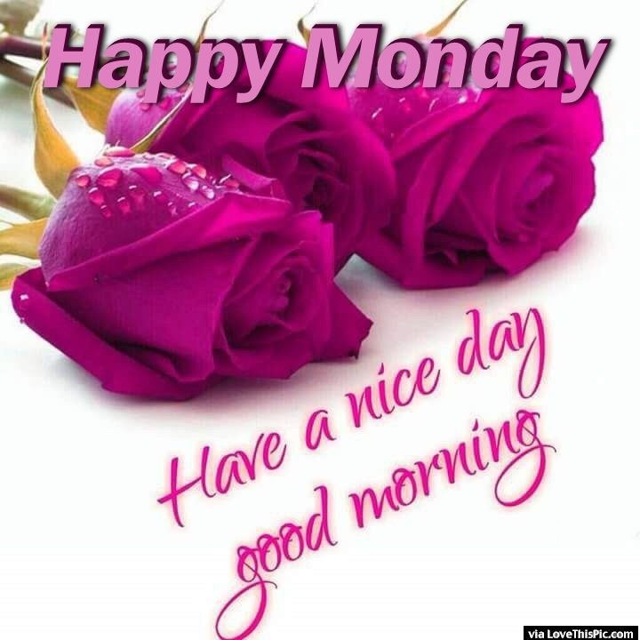 happy monday have a nice day good morning pictures photos and