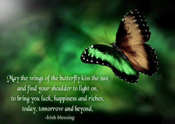 may the wings of the butterfly kiss the sun and find your