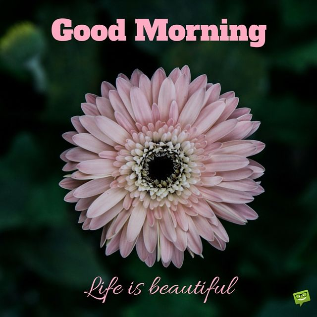 Good Morning Life Is Beautiful Quote Pictures Photos And Images