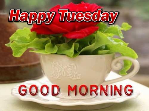 Happy Tuesday Good Morning Image Quote Pictures, Photos