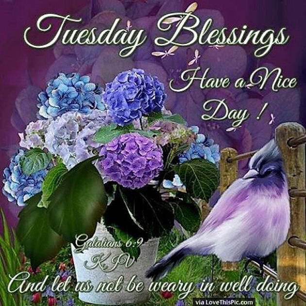 Tuesday Blessings Have A Nice Day Quote Pictures, Photos ...