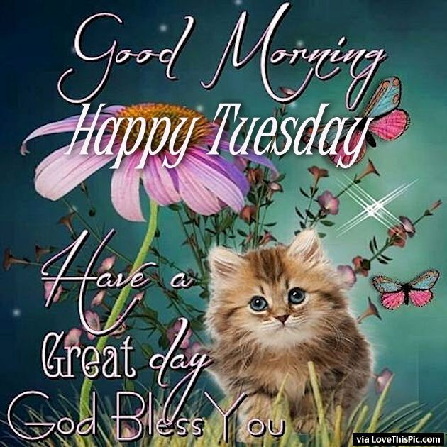 Good Morning Happy Tuesday Have A Great Day Pictures, Photos, and ... Terrific Tuesday Quotes