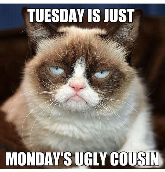 Funny Tuesday Work Meme : Tuesday is just mondays ugly cousin pictures photos and