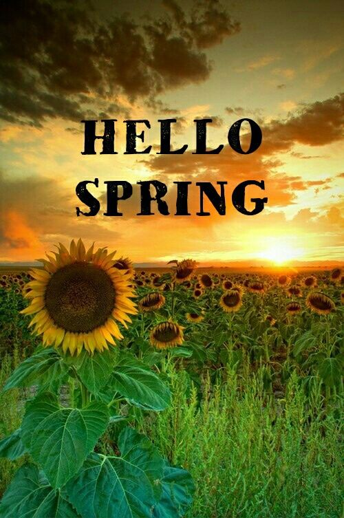 Hello Spring Pictures Photos And Images For Facebook