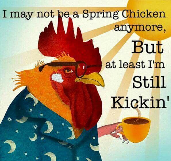 Good Morning Sunday Chicken : I may not be a spring chicken but am still kickin