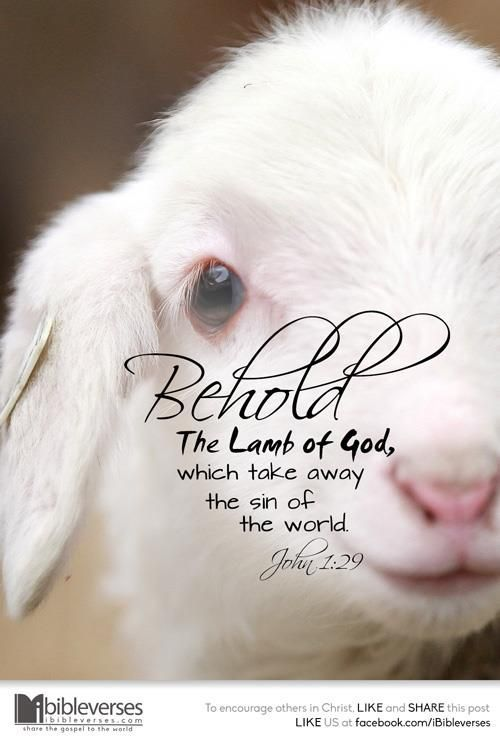 Behold The Lamb Of God, Which Take Away The Sin Of The ...