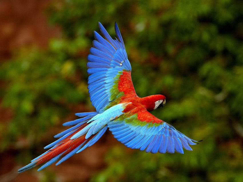 Bird Pictures Amazing Birds: Beautiful Bird Pictures, Photos, And Images For Facebook