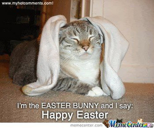 Funny Meme For Easter : Happy easter funny images memes quotes jokes and riddles with