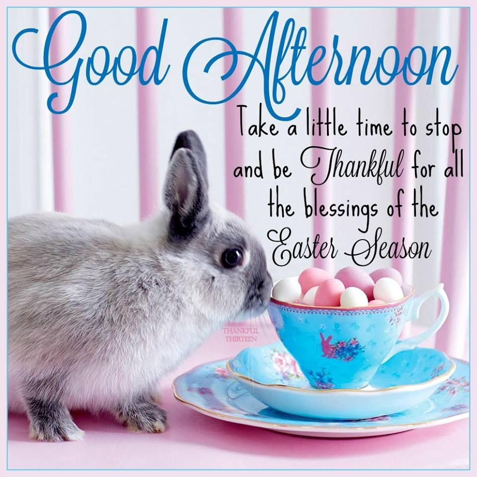 Good Afternoon Easter Quote Pictures, Photos, And Images