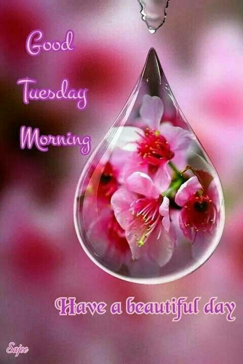 Good Morning My Love Happy Tuesday : Good tuesday morning pictures photos and images for