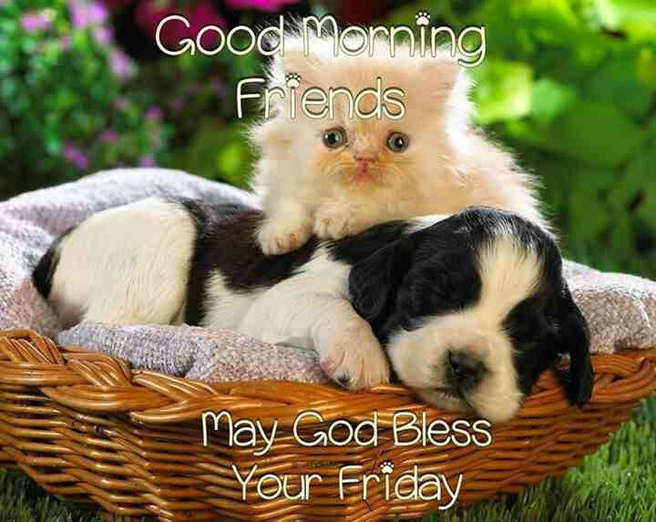 Good Morning Friends May God Bless Your Friday Cute Quote Pictures
