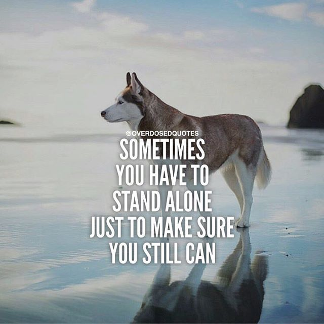Inspirational Quotes On Life: Sometimes You Have To Stand Alone Pictures, Photos, And