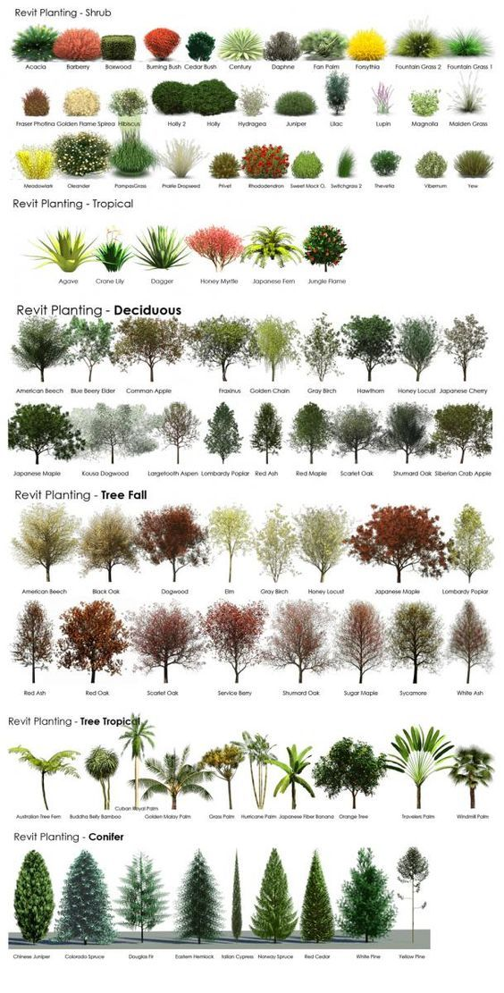 A guide to help choose shrubs plants trees for landscaping pictures photos and images for for A gardener is planting two types of trees
