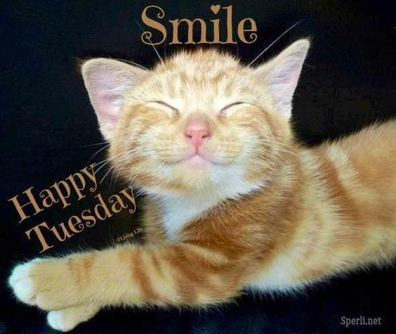 Smile, Happy Tuesday Pictures, Photos, and Images for ...
