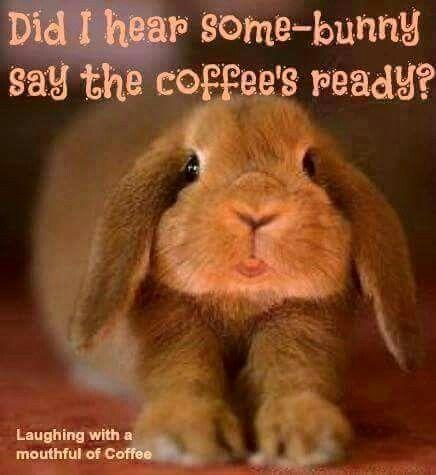 Bunny Coffee Instagram