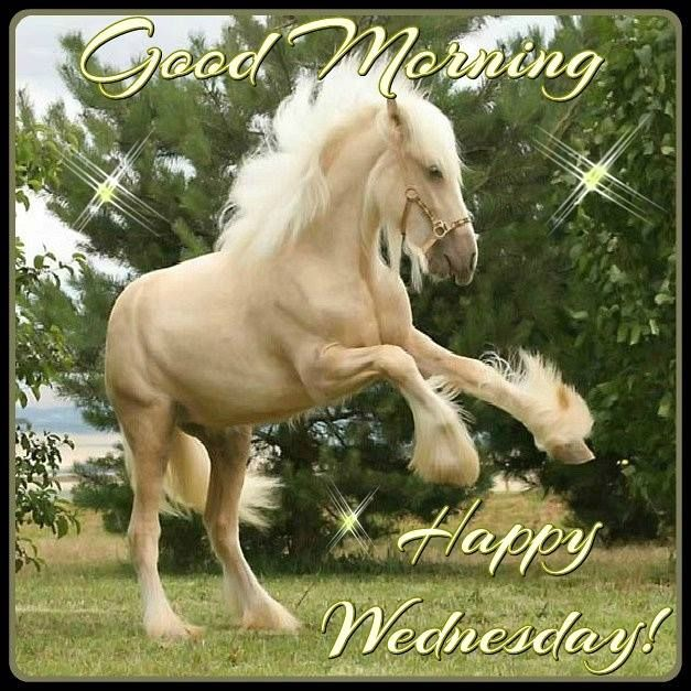 Good Morning Happy Wednesday Image With A Horse Pictures