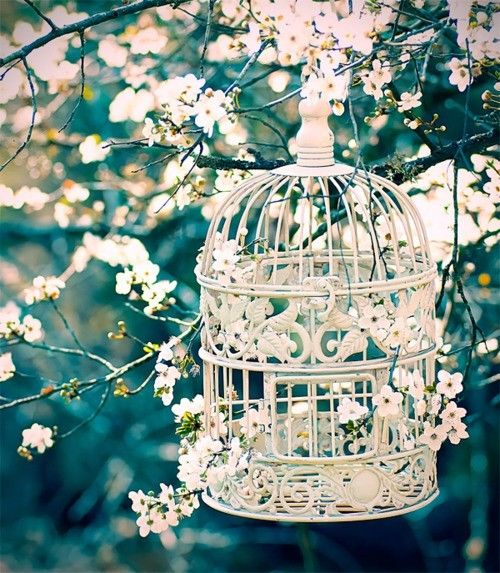 spring blossoms amp bird cage pictures photos and images