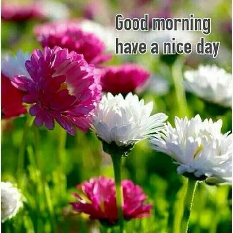 Good Morning Have A Nice Day Spring Flowers