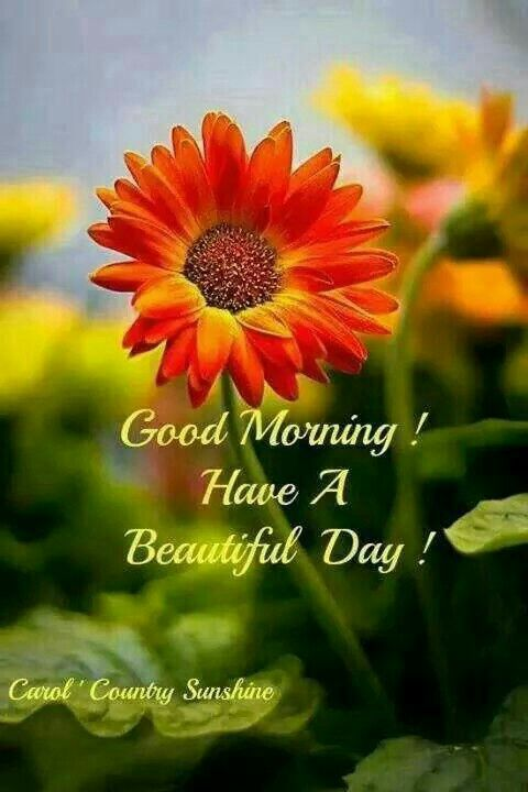 Beautiful Day Quotes: Good Morning Have A Beautiful Day Spring Quote Pictures