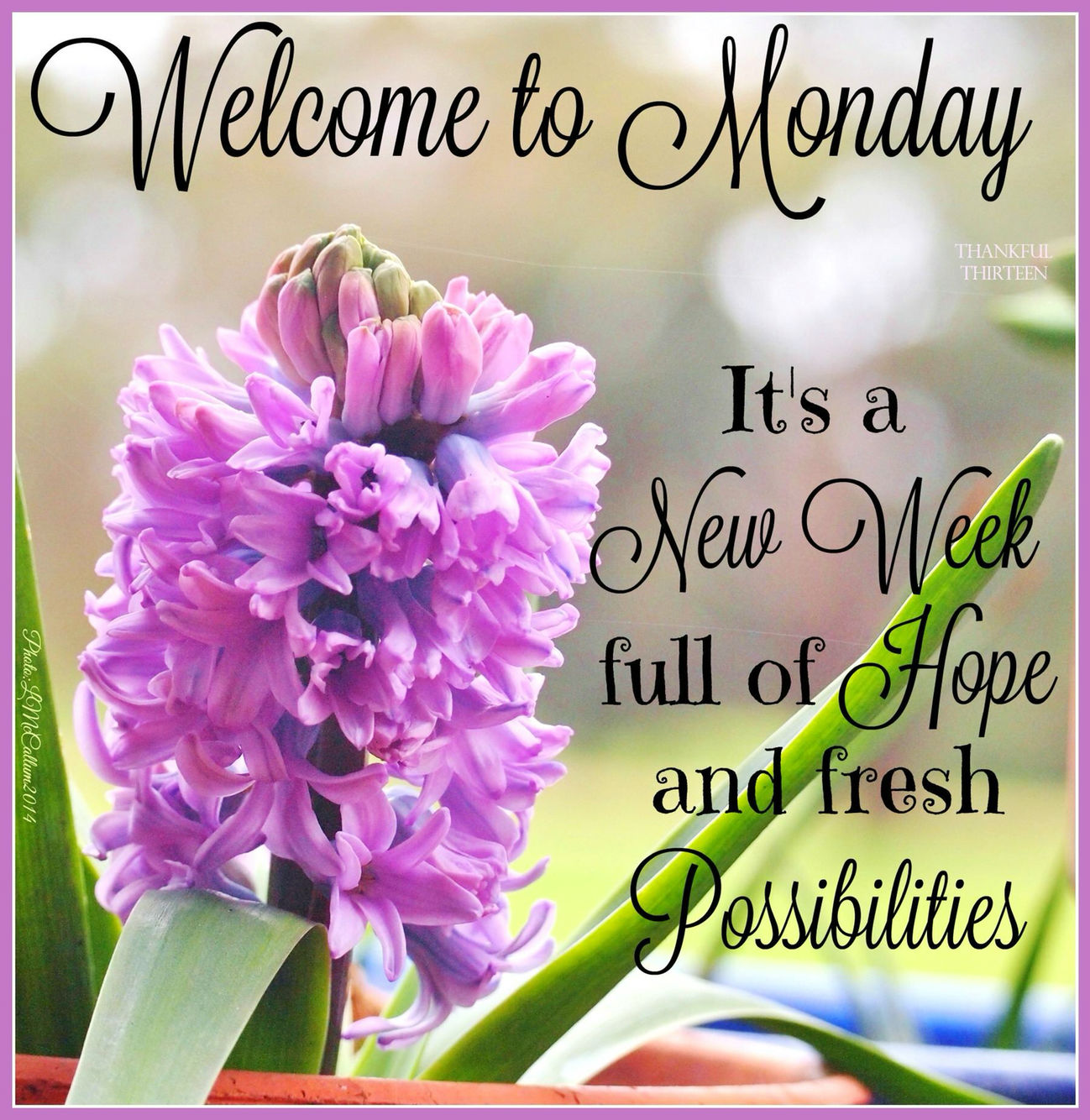 Good Morning Monday Quotes Welcome To Monday Its A New Week Pictures Photos And Images For