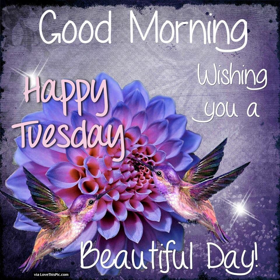 Good morning happy tuesday wishing you a beautiful day pictures good morning happy tuesday wishing you a beautiful day izmirmasajfo Image collections