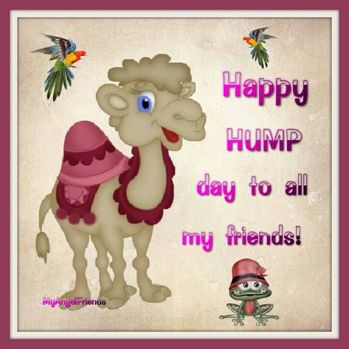 Happy Hump Day To All My Friends