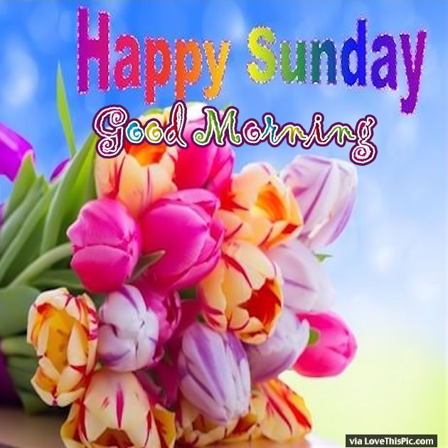 Good Morning Sunday Flowers Images : Colorful sunday good morning flowers pictures photos and