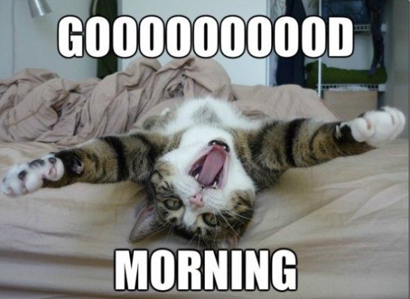 http://www.lovethispic.com/uploaded_images/252423-Gooooood-Morning.jpg