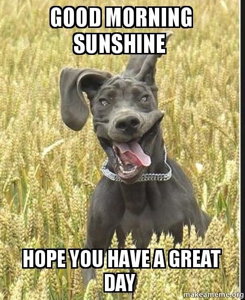Good Morning Beautiful Hope You Have A Great Day : Good morning sunshine hope you have a great day pictures