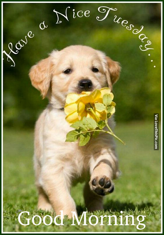 Have A Nice Tuesday Good Morning Pictures Photos And Images For