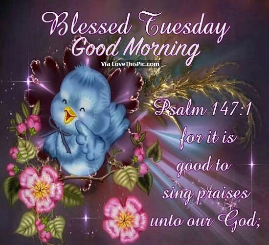blessed tuesday good morning pictures photos and images