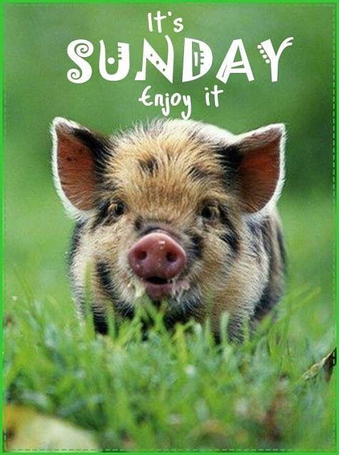 Its Sunday Enjoy It Pictures Photos And Images For