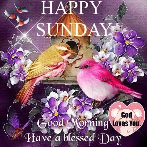 Good Morning Sunday Images And Quotes Happy Funday Wishes: Happy Sunday Good Morning Have A Blessed Day Pictures