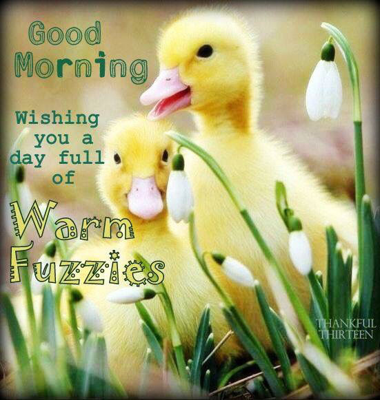 Good Morning Wishing You A Day Full Of Warm Fuzzies