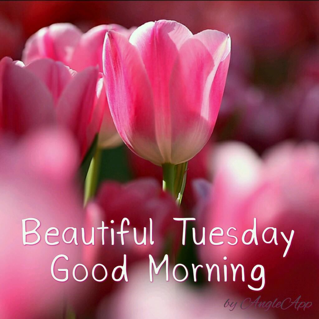 Beautiful Tuesday Good Morning Pictures Photos And Images For