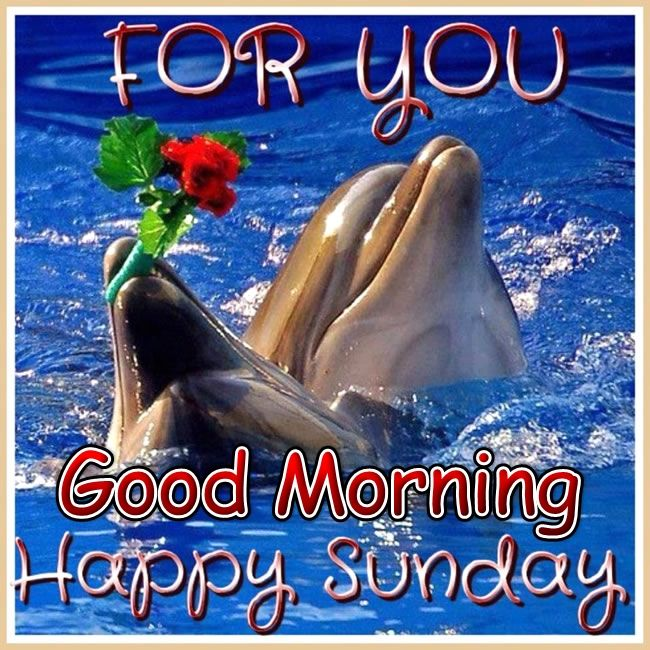 Good Morning Sunday Cute Images : For you good morning happy sunday pictures photos and