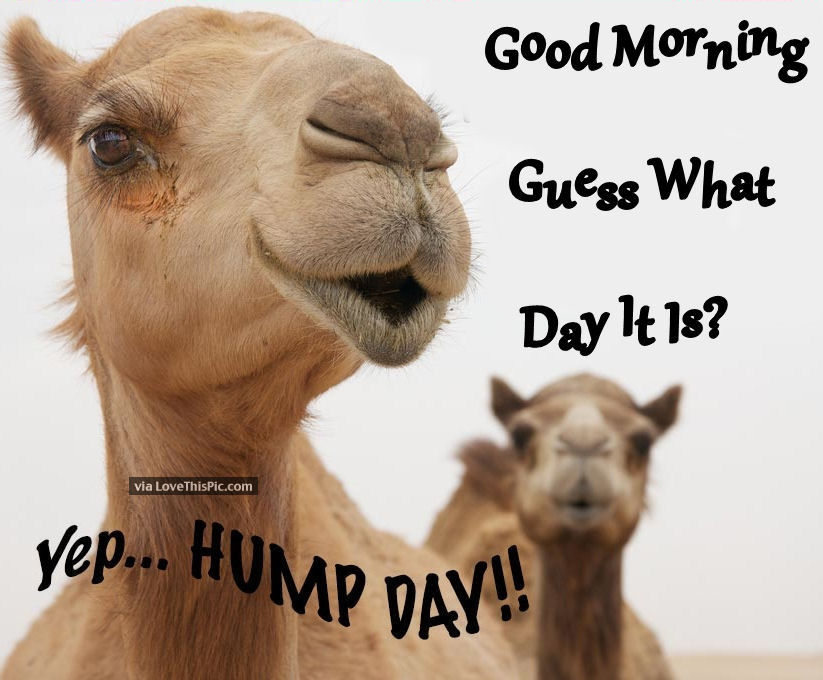 enjoy your hump day hump day does not live up to my expectations