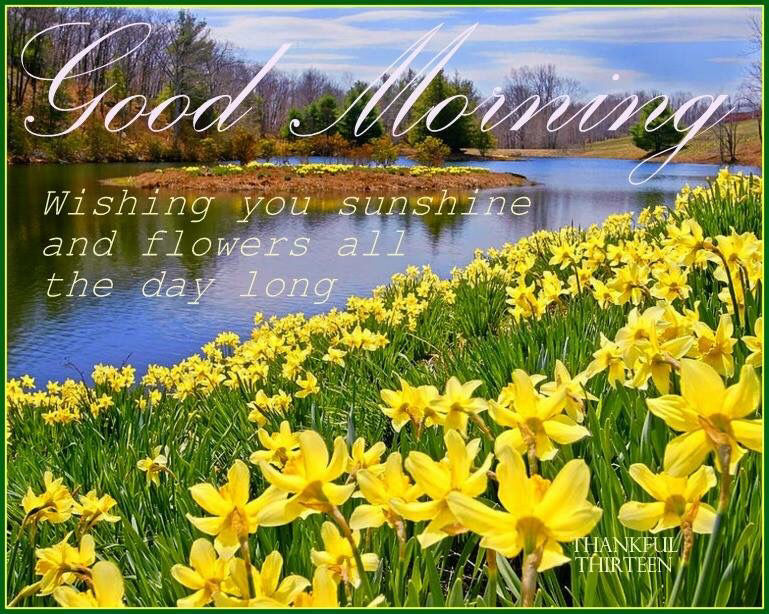 Good morning wishing you sunshine and flowers pictures photos and good morning wishing you sunshine and flowers mightylinksfo