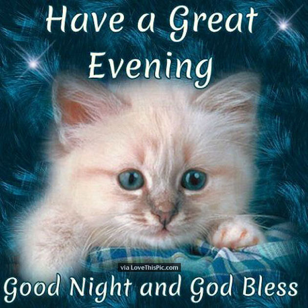 Image result for have a wonderful night kittens