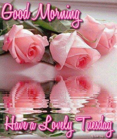 Good Morning Have A Lovely Tuesday Pictures Photos And Images For