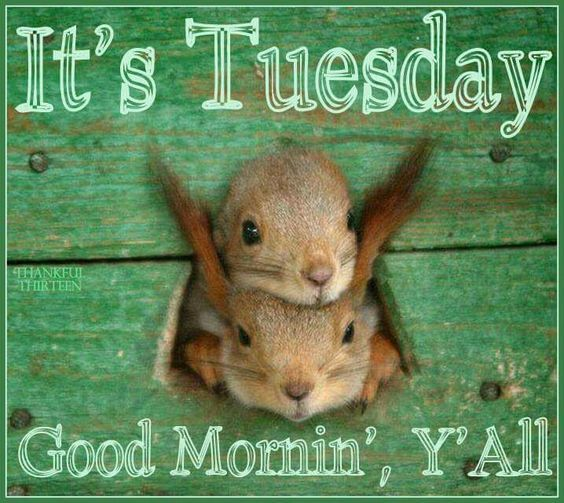 Its Tuesday Its Tuesday, Go...