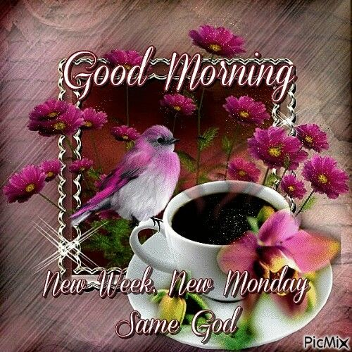 good morning new week new monday pictures photos and images for