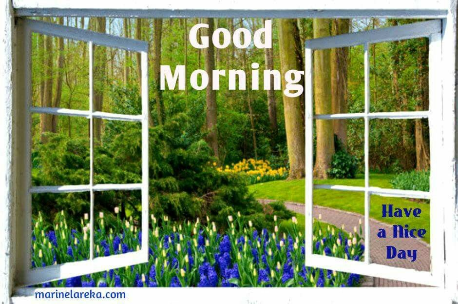 Good Morning Spring Flowers Image Quote Pictures Photos And Images