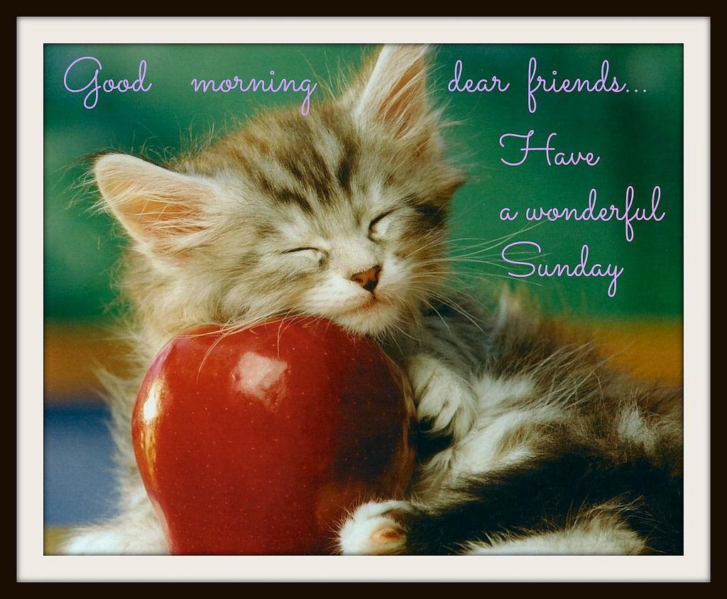 good morning dear friends have a wonderful sunday