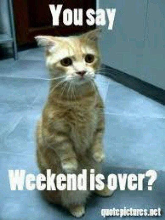 You Say Weekend Is Over? Pictures, Photos, and Images for