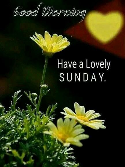 Good Morning Mom Messages : Good morning have a lovely sunday pictures photos and