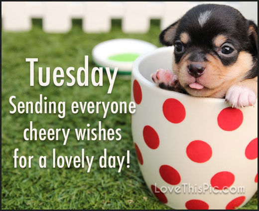 Sending Tuesday Cheer Pictures, Photos, And Images For