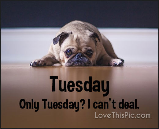 Only Tuesday I Cant Deal! Pictures, Photos, And Images For