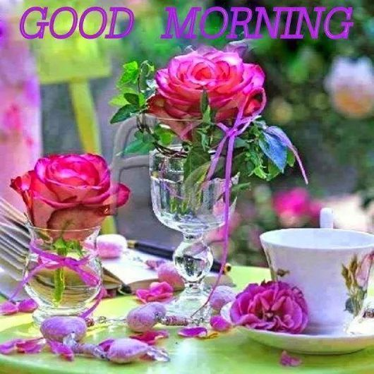 Good Morning Beautiful Pink Roses : Good morning beautiful flowers images life style by