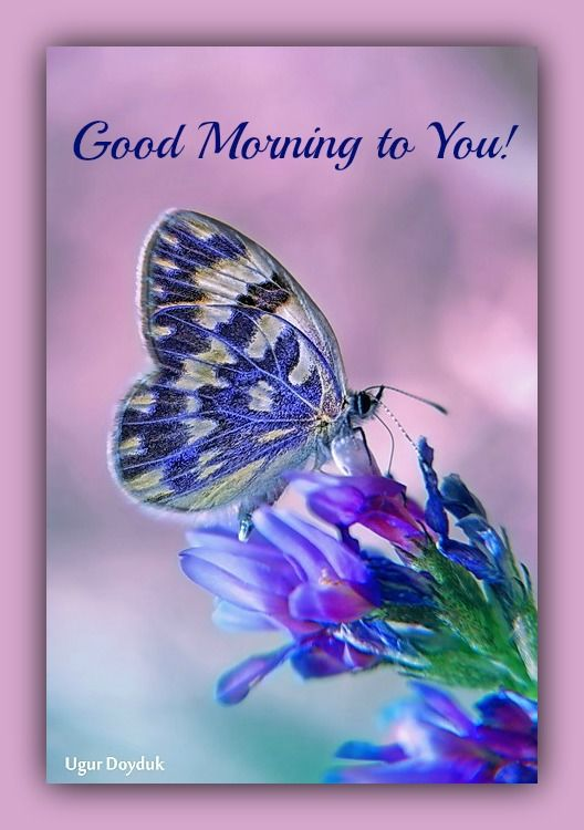 good morning to you butterfly image quote pictures photos